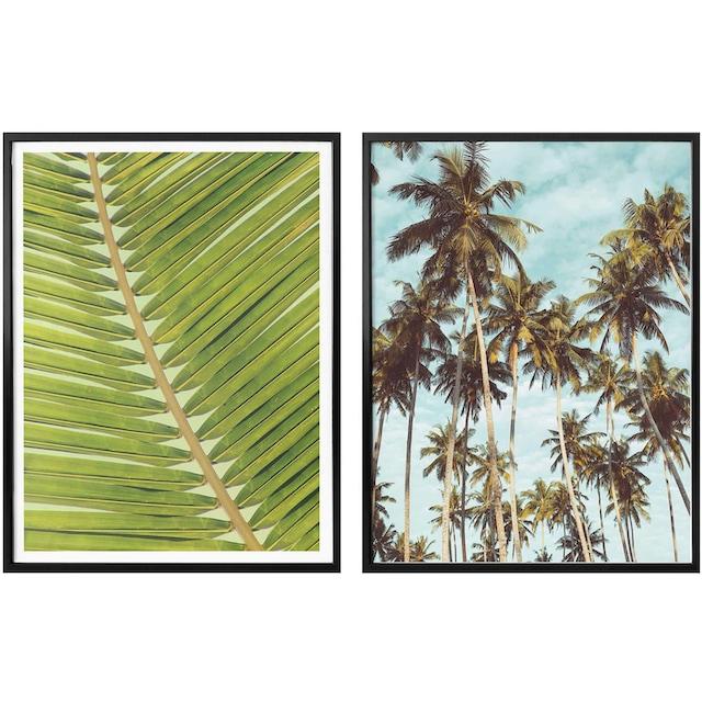 Poster »Palmenblätter« (Set)