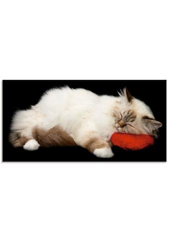Artland Glasbild »Müde Katze«, Haustiere, (1 St.) kaufen