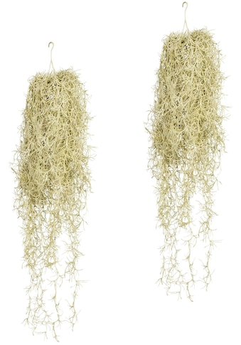 Creativ green Kunstranke »Tillandsia - Hängezopf« (Set, 2 Stück) kaufen