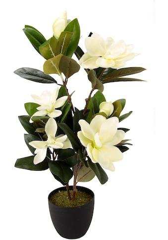 I.GE.A. Kunstbaum »Magnolienbusch« (1 Stück) kaufen