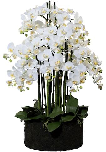 Creativ green Kunstorchidee »Phalaenopsis« (1 Stück) kaufen