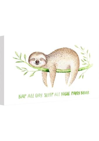 Wall-Art Leinwandbild »Kvilis - Nap all Day« kaufen
