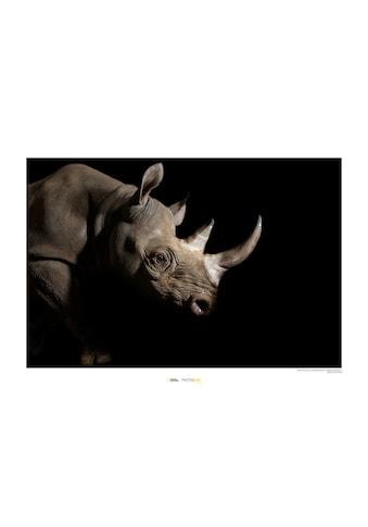 Komar Poster »Black Rhinoceros«, Tiere, Höhe: 30cm kaufen