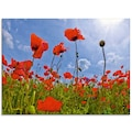Artland Glasbild »Mohnblumenfeld«, Blumen, (1 St.)
