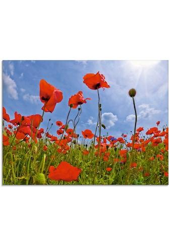 Artland Glasbild »Mohnblumenfeld«, Blumen, (1 St.) kaufen