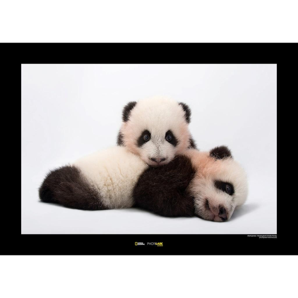 KOMAR Wanddekoration »Giant Panda«