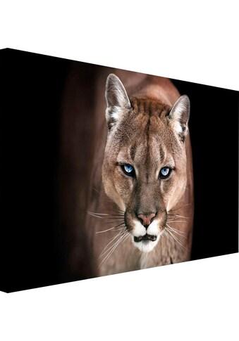 Wandbild »Puma« kaufen
