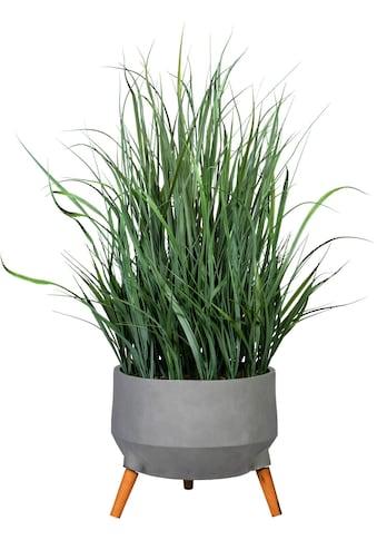 Creativ green Kunstgras »Grasbusch«, in Fibreclayschale kaufen