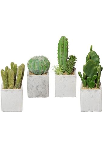 Creativ green Kunstkaktus »Kaktus«, 4er Set, im Zementtopf kaufen
