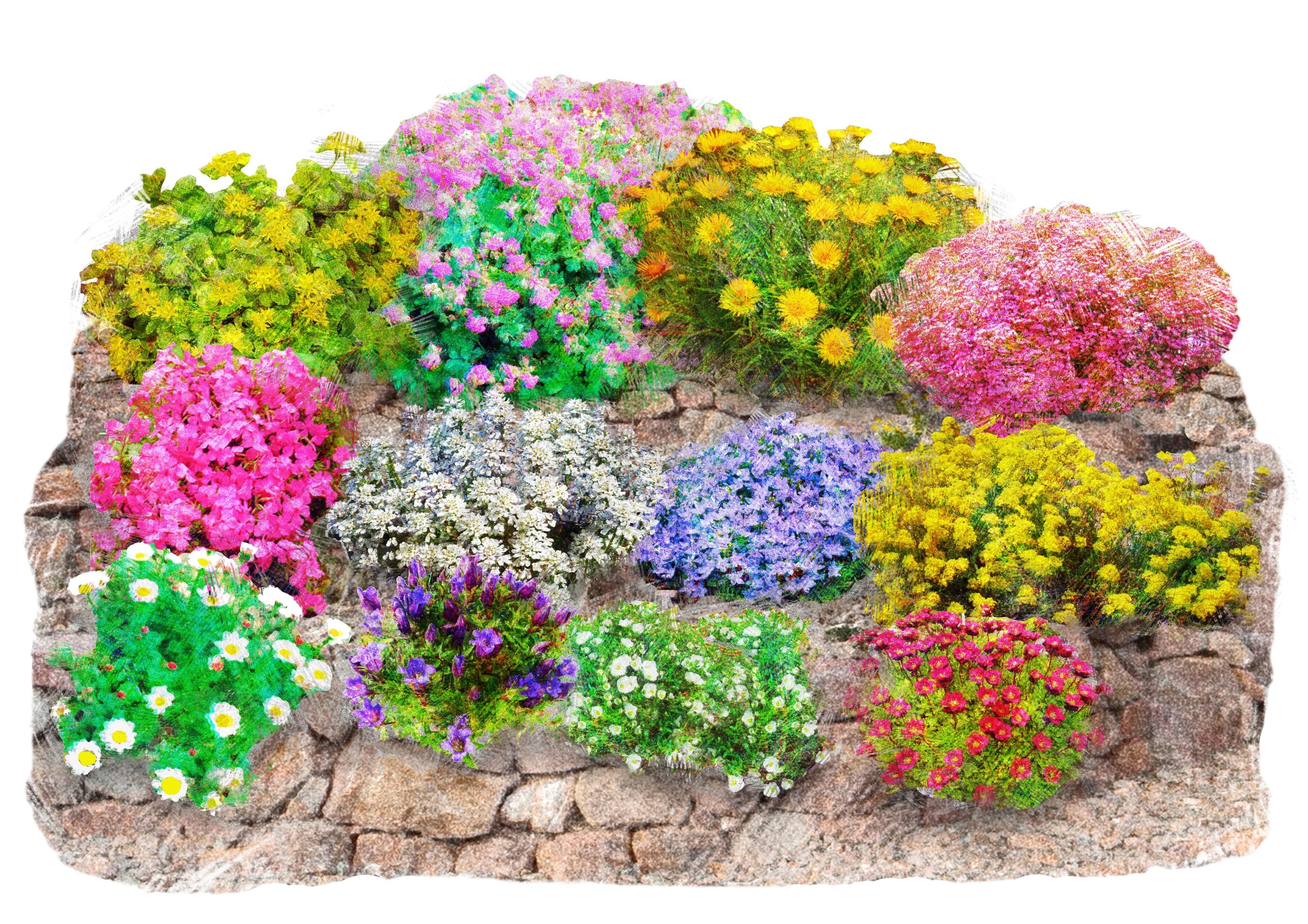 Beet & Balkonpflanze »Trockenmauer-Set« | Garten > Balkon > Balkon-Sets | Bunt | QUELLE