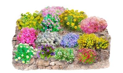 Beet & Balkonpflanze »Trockenmauer - Set« kaufen