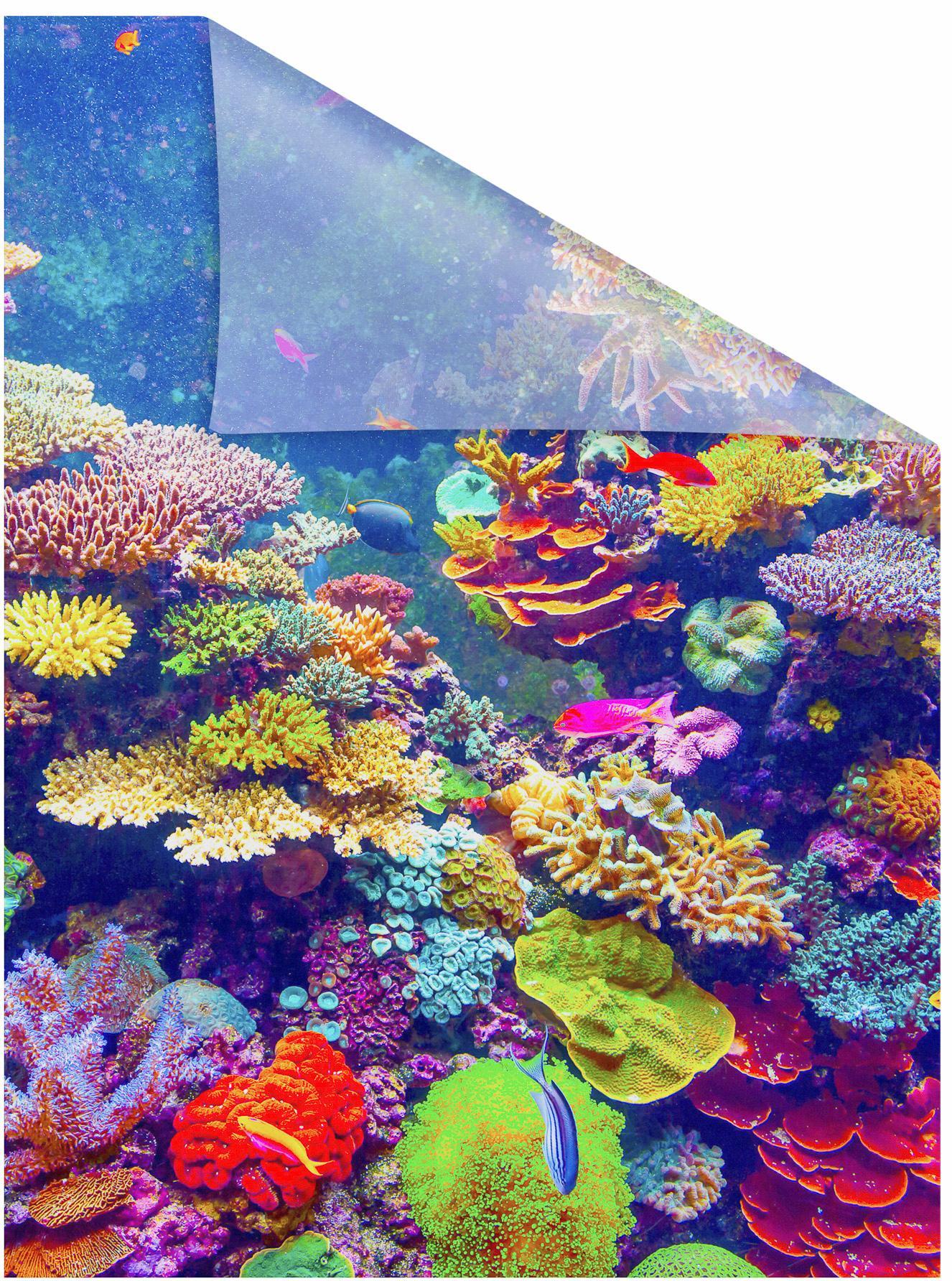 fensterfolie aquarium lichtblick blickdicht. Black Bedroom Furniture Sets. Home Design Ideas