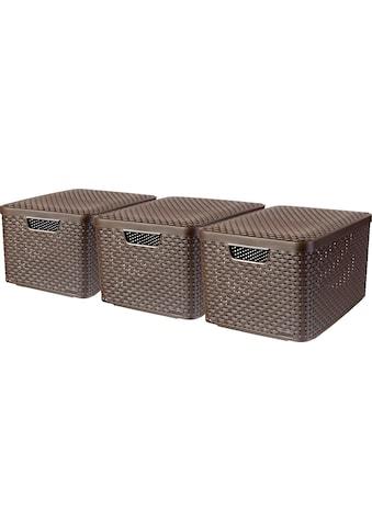 Curver Aufbewahrungsbox »Style Box L«, (Set, 3 St.), dunkelbraun kaufen