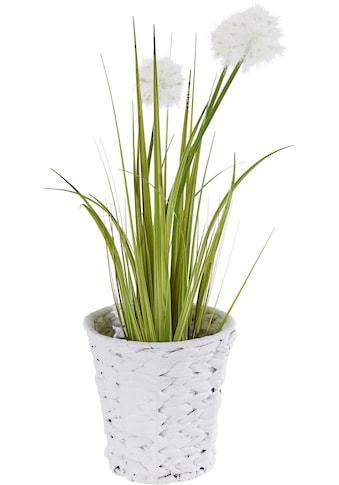 I.GE.A. Kunstpflanze »Pusteblumegras in Wasserhyazinthentopf« (1 Stück) kaufen