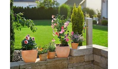 GARDENA Bewässerungssystem »Micro-Drip-System, 13000-20«, Start-Set Pflanztöpfe S kaufen