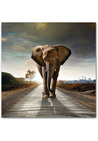 Home affaire Acrylglasbild »Elefant«, 50/50 cm kaufen