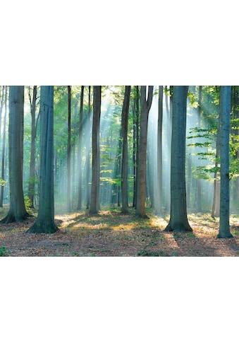 Deco - Panel »Wald im Sonnenlicht« kaufen