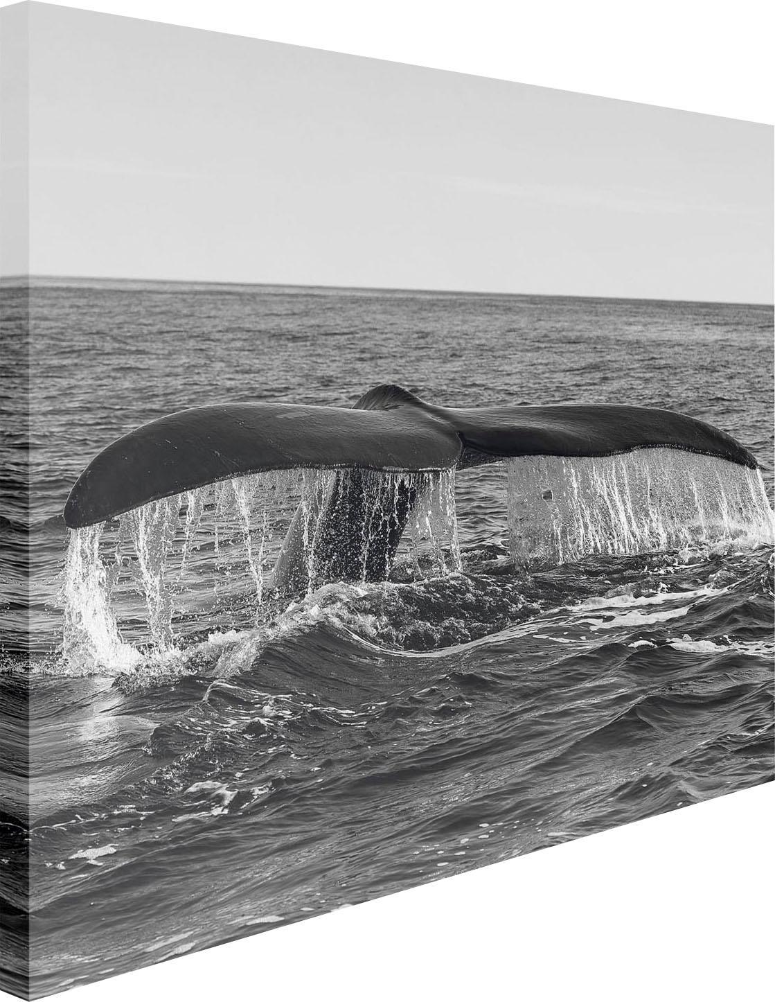Leinwandbild Walflosse 100/140 cm