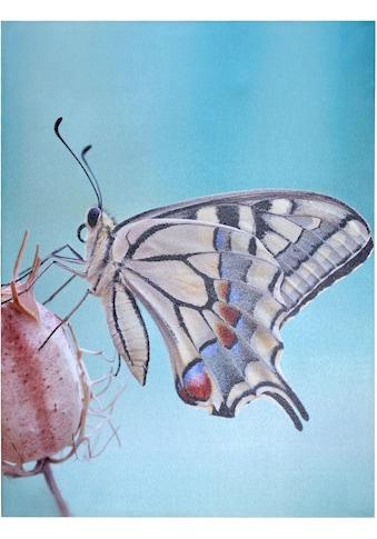 HOFMANN LIVING AND MORE LED-Bild »Schmetterling«, 60/80 cm kaufen