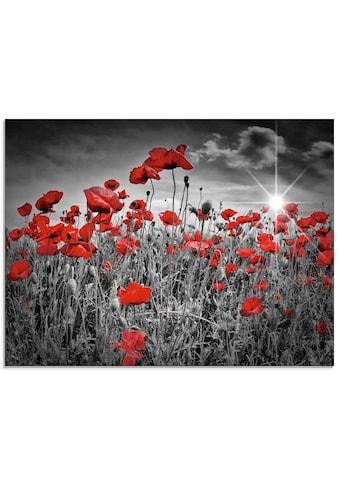 Artland Glasbild »Idyllisches Mohnblumenfeld«, Blumen, (1 St.) kaufen