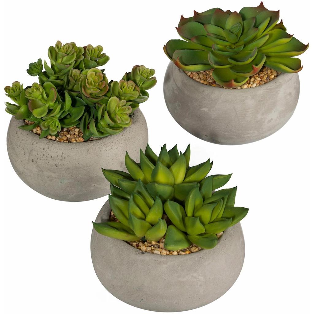 Creativ green Kunstpflanze »Sukkulenten«