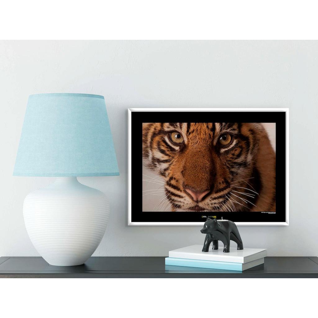 Komar Poster »Sumatran Tiger Portrait«, Tiere, Höhe: 30cm