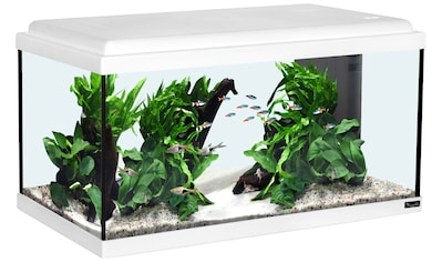AQUATLANTIS Aquarium »Advance 60 LED«, 54 Liter, BxTxH: 60x30x34 cm, weiß kaufen
