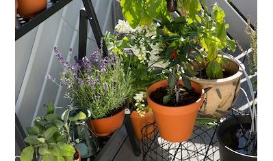 GARDENA Bewässerungssteuerung »city gardening, 01265 - 20« kaufen