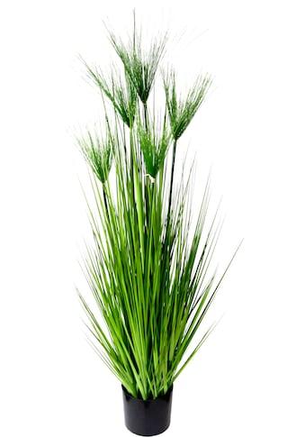 I.GE.A. Kunstpflanze »Zyperngras im Topf« (1 Stück) kaufen
