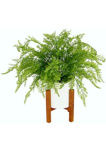 DELAVITA Kunstpflanze »Wilhelmine« kaufen