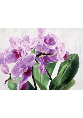 my home Kunstdruck »SERGIO JANNACE / Orchidee selvagge«, (1 St.) kaufen