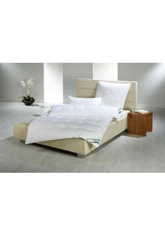f.a.n. Schlafkomfort Kunstfaserbettdecke »First Class«, leicht, Bezug 100% Baumwolle,... kaufen