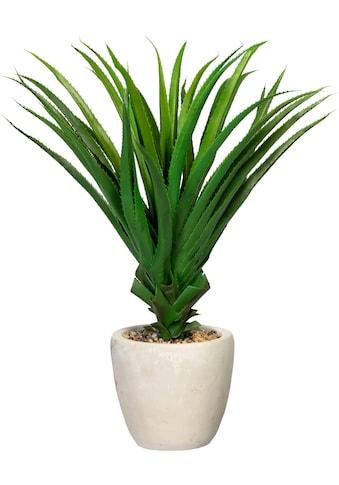 Creativ green Künstliche Zimmerpflanze »Pandanus multispicatus«, im Zementtopf kaufen