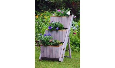 dobar Pflanzentreppe, BxTxH: 41x55x85 cm kaufen