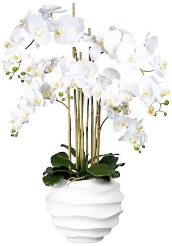 Creativ green Kunstorchidee »Phalaenopsis«, in Design-Kunststoffvase kaufen