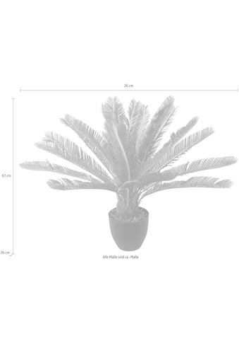 I.GE.A. Kunstpflanze »Cycaspalme im Topf« (1 Stück) kaufen