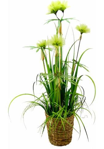 I.GE.A. Kunstpflanze »Papyrusgras« (1 Stück) kaufen
