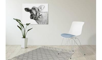 Kayoom Schalenstuhl »Emily«, mit farblich abgesetztem Sitzkissen kaufen