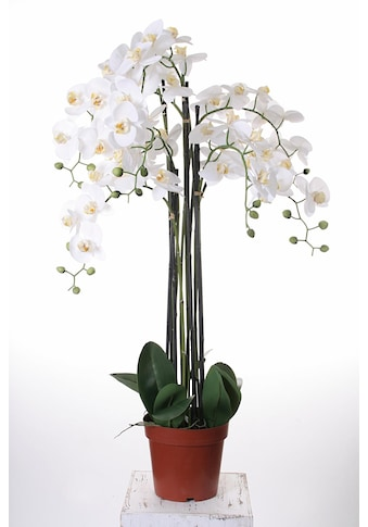 my home Kunstorchidee »Orchidee XXL« kaufen