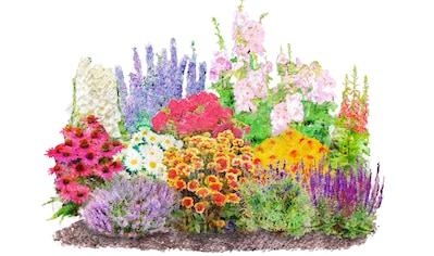 : Beetpflanzen - Set »Landhausgarten«, 12 Pflanzen kaufen