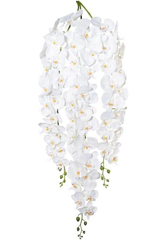 Creativ green Kunstorchidee »Phalaenopsisranke« kaufen