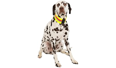 Hundehalsband »Signalhalsband« kaufen