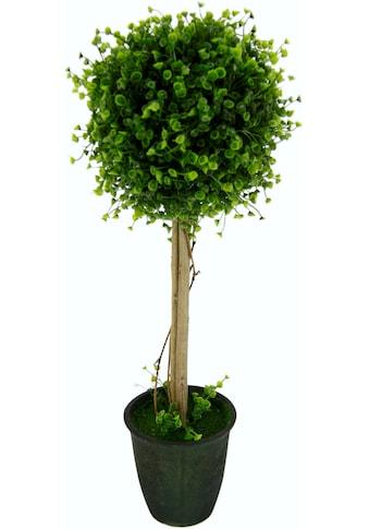I.GE.A. Kunstbaum »Buchskugelbaum« (1 Stück) kaufen