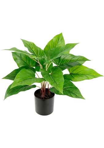 I.GE.A. Künstliche Zimmerpflanze »Anthuriumblatt« kaufen