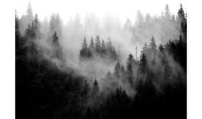 CONSALNET Vliestapete »Wald im Nebel«, in verschiedenen Größen kaufen