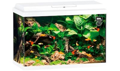 JUWEL AQUARIEN Aquarium »Primo 70«, BxTxH: 61x31x44 cm, 70 l kaufen