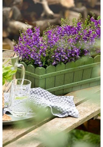 Emsa Blumenkasten »Country« (2 Stück) kaufen
