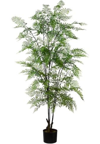 Creativ green Kunstpflanze »Adianthum« (1 Stück) kaufen