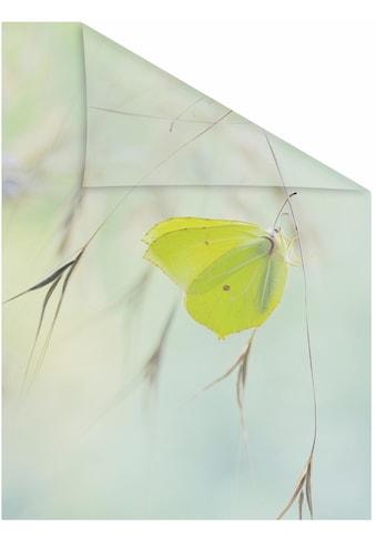 LICHTBLICK Fensterfolie »Schmetterling Grün«, selbstklebend, Sichtschutz kaufen
