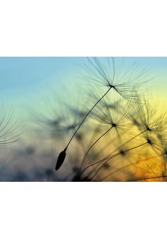 Home affaire Glasbild »supertramp8: Sonnenuntergang und Pusteblumen« kaufen